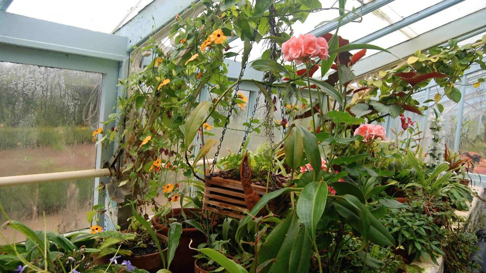 Darwin ve svých sklenících experimentoval s oplodňováním orchidejí