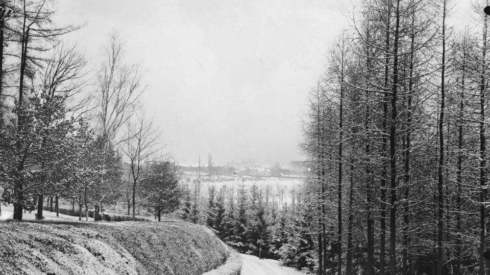 Plzeň-Lochotín, lesík v zimě