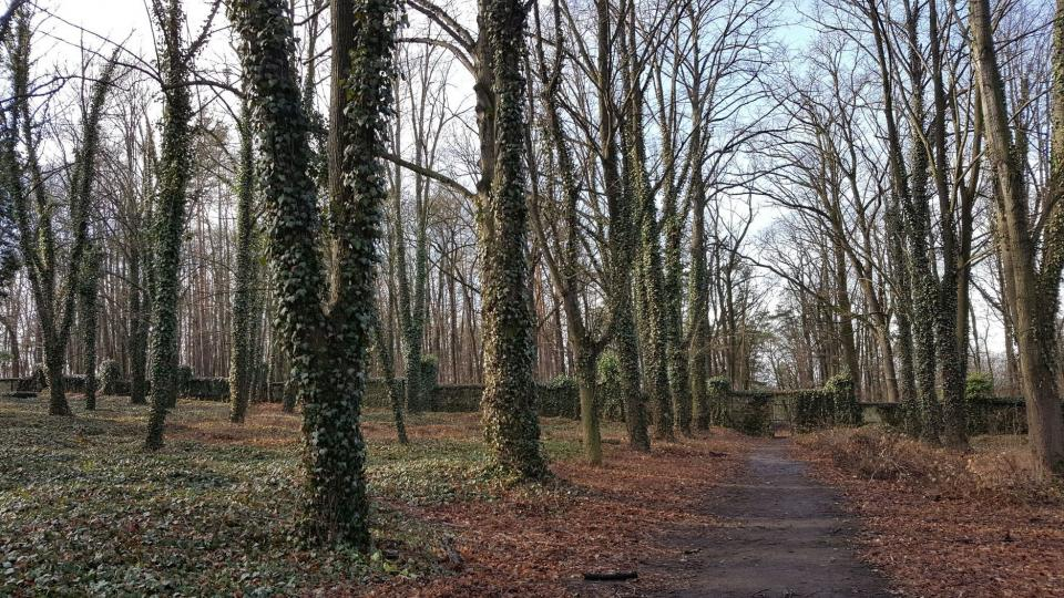 Větve stromů tvoří klenbu nad cestou