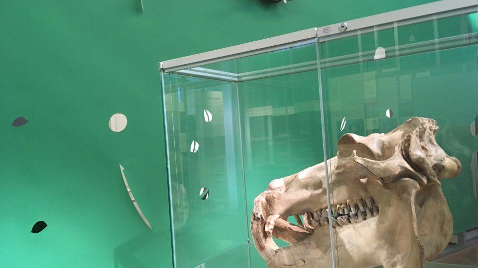 """Příprava výstavy """"Milování v přírodě"""" v ústeckém muzeu"""