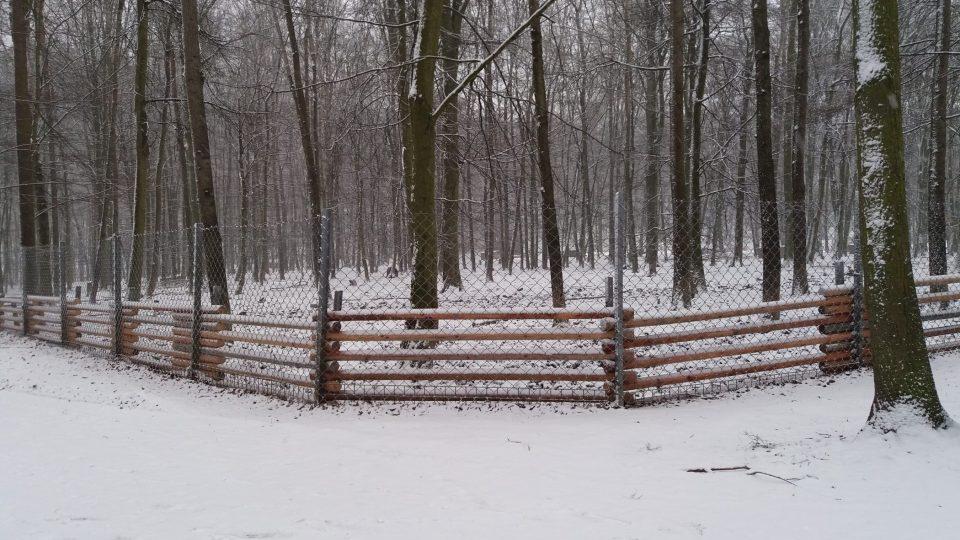 Část určená pro divočáky má ještě jeden vlastní plot