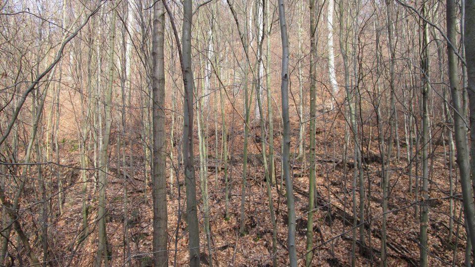 Za skalními útvary musíte do lesa