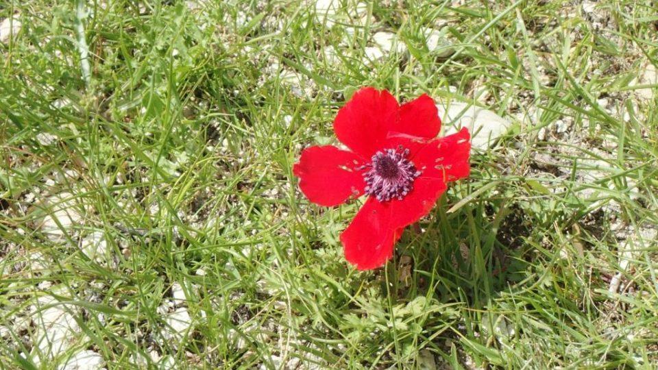 Jarní příroda v okolí Betléma překvapí i rozkvetlou krásou