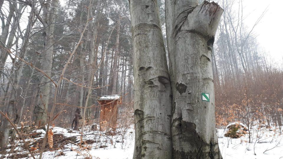Stezka vás povede krásným bukovým lesem až na vrchol bájné Goduly