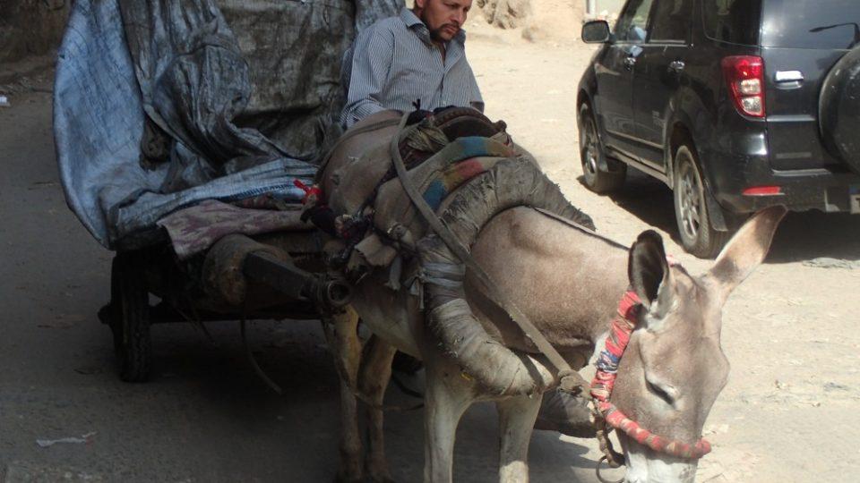 Místní využívají stále i tradiční způsob přepravy, což se vyplatí zejména ve zdejších úzkých uličkách
