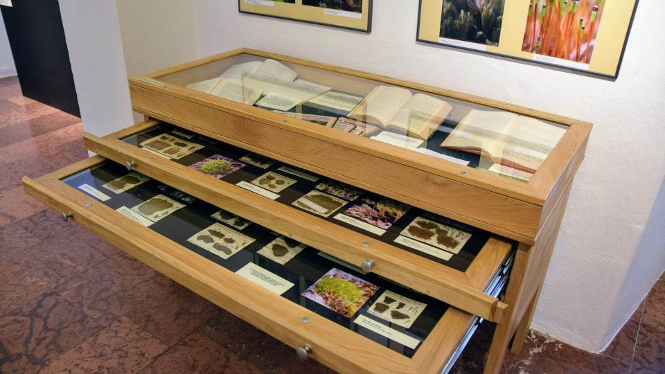 Výstava Mechorosty v muzeu v Novém Jičíně