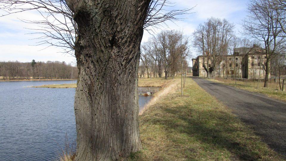 Přilehlý několikahektarový zámecký park, dříve zpustlý a zarostlý křovím a náletovými dřevinami, je už hezky upravený