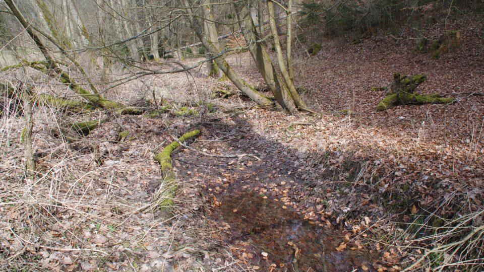 Asi půl kilometru nad soutokem je poslední místo, kde ve Špraňku najdemem vodu. Dále už potok teče pod zemí