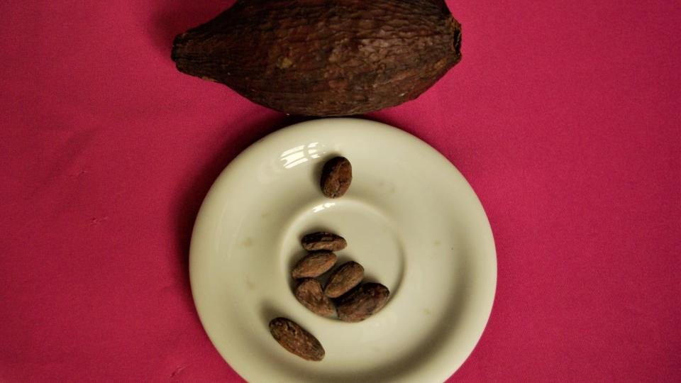 Kakaový bob a kakaová zrna