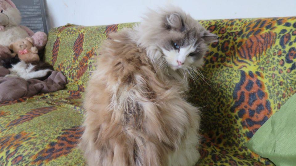 Kočky v Pohádkové zahradě se mají pohádkově