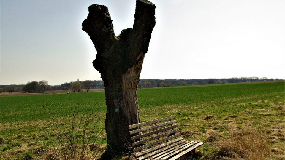 Torzo třešně, u které A. Macková s oblibou malovala
