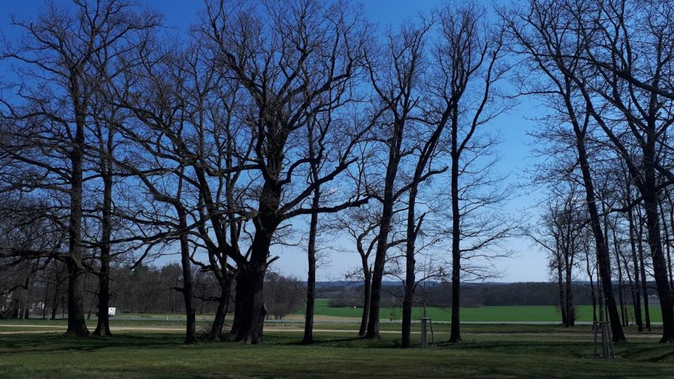 Stromy spolu mluví prostřednictvím kořenového systému a díky soužití s houbami