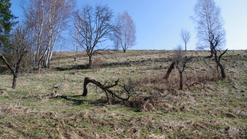Poslední zbytky zdejších sadů pomalu podléhají zkáze. Přesto si sem lidé z okolí chodí pro rouby odolných odrůd