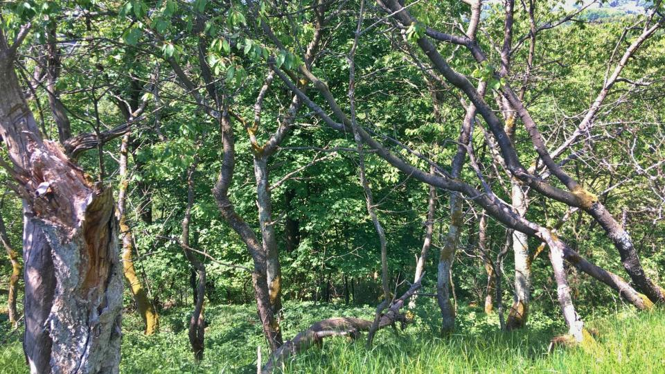 Podhorní vrch je přírodní rezervací od roku 1997