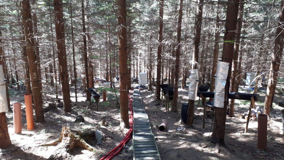 Ke stanici patří také oplocený kus lesa, kde probíhají další výzkumy