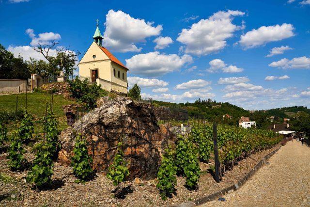 Trojská vinice sv. Kláry se tyčí nad areálem Trojského zámku   foto: Pavel Vítek,  R. V. V. Studio