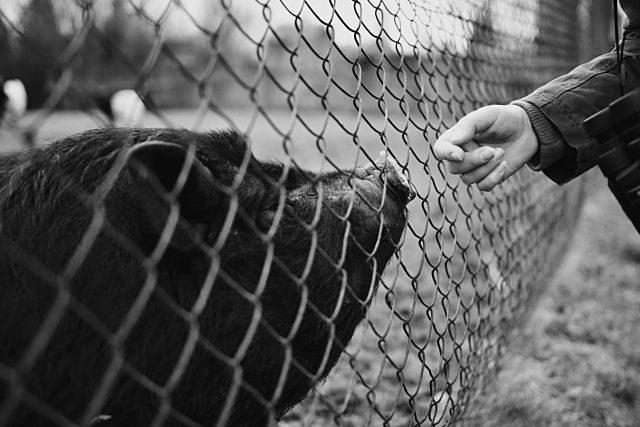 Diskuse nad knihami Desatero smyslů od Jaroslava Petra  (nominace na Magnesii literu) a Řeč zvířat od Carla Safiny  (ilustrační foto)   foto: Luděk Čertík