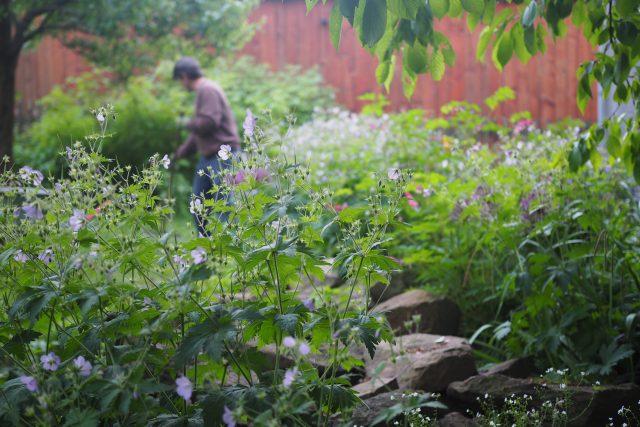 V dobře opečovávané zahradě člověk formuje přírodní síly, zároveň s tím naslouchá jejich potřebám a životní dynamice