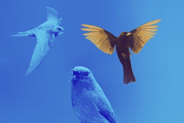 Svítání - Mezinárodní den ptačího zpěvu | foto: Český rozhlas