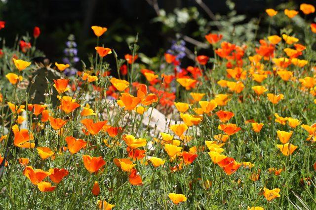 Botanická zahrada PřF UK | foto: archiv Botanické zahrady PřF UK