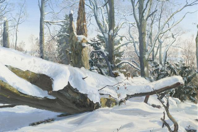 Mladějov - tis a buk, olej na plátně, 40x50 cm, 2017