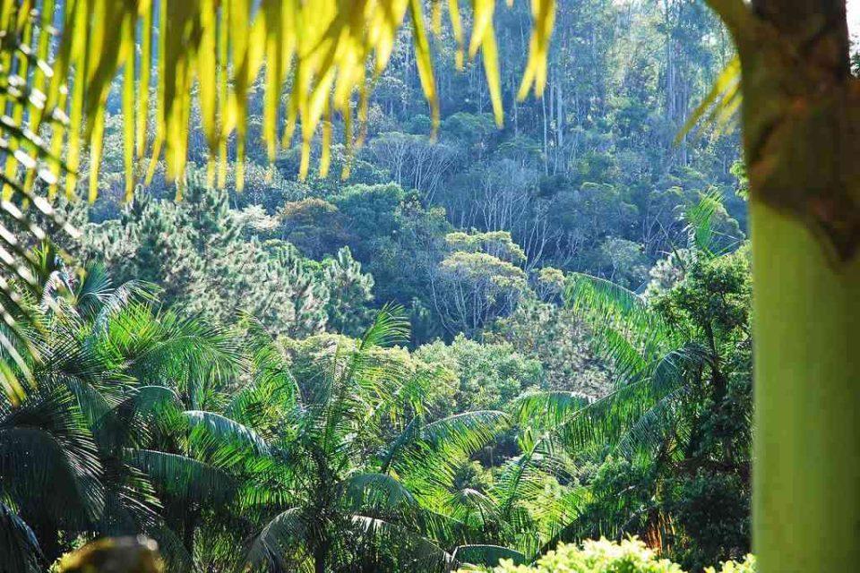 Brazilský prales, ilustrační foto